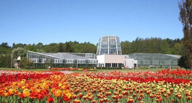 Pavasara ziedu burvība Tallinā  GARANTĒTS