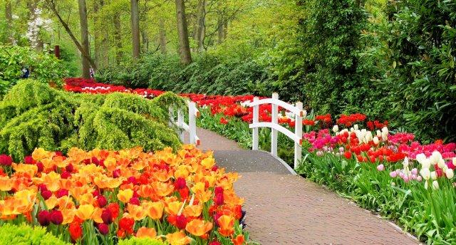 «Holande mierīgā gaitā – Ziedu svētki un slavenā ziedu parāde 2018!» 8 dienas! Ziedu dārzi un Hollandes šarms.