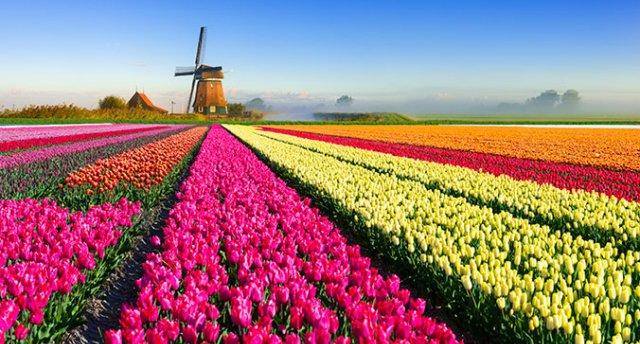 Ziedu parāde Holandē