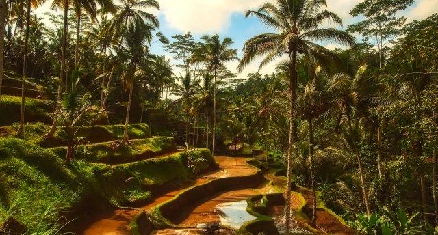 Dzīves svinēšana Bali salā