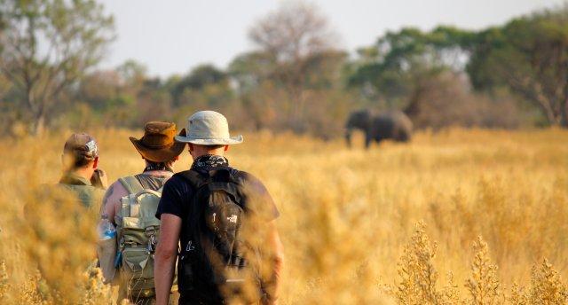 Viktorijas ūdenskritums Zimbabvē un Botsvanas dabas parki