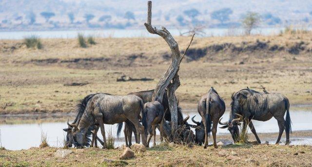 Dienvidāfrika - priekšstati un mīti