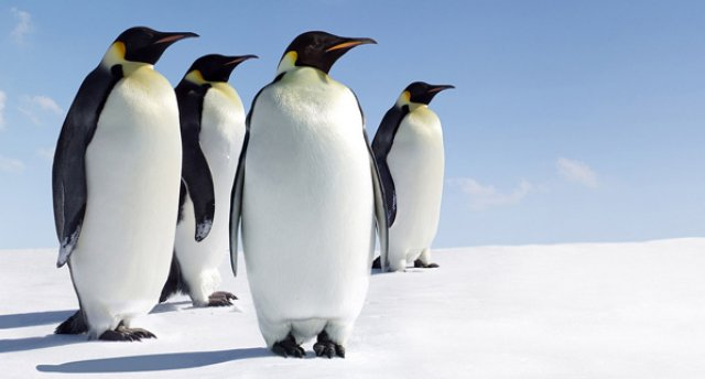 Ērgļi, pingvīni, lauvas un galvu reibinoši karuseļi! Vācijas atrakciju parki! 5 dienas!