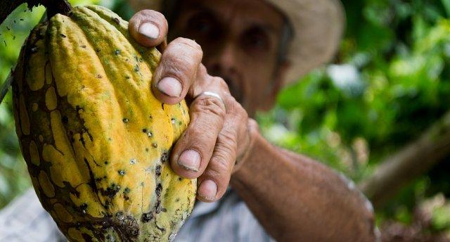Kafijas zeme Kolumbija un Panamas kanāls