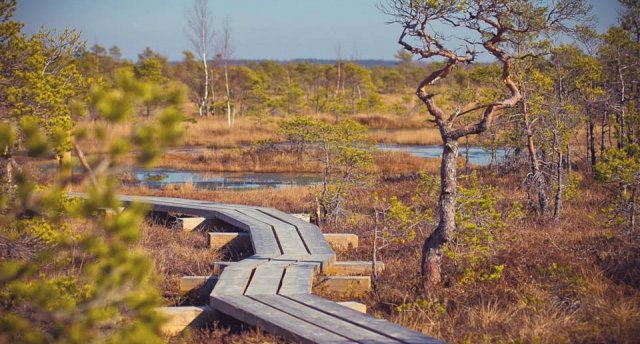 PUTNU VĒROŠANA! Dodamies dabā - Ķemeru Nacionālais parks | Kaņiera ezers |Jūras līča piekraste - Kurzemē!