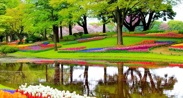 Nīderlande un ziedu parāde