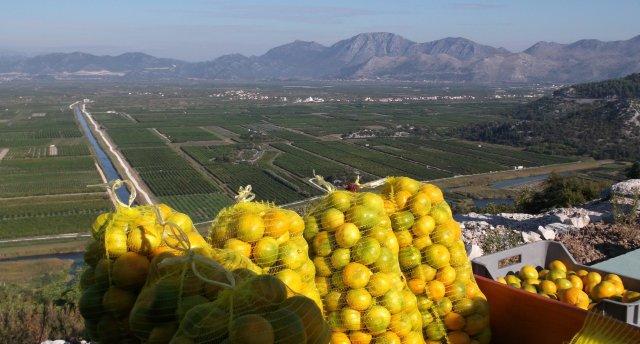 Mandarīnu laiks Horvātijā ar mazu ielūkošanos Bosnijā-Hercegovinā.
