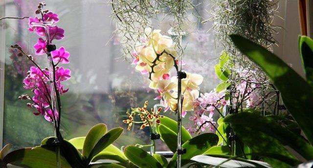 Uz krāšņo ziedu – orhideju izstādi Tallinā! Keilas ūdenskritums | Tallinas ekskursija!