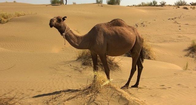 Turiāde. Karakuma tuksnesis, Kopetdaga un Mēness kalni Turkmenistānā