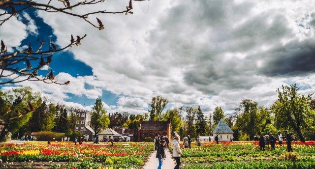 Tulpju krāšņums Burbišķu muižā   Klebonišķu ciems   Šeduves vējdzirnavas   Pakrojas muiža!