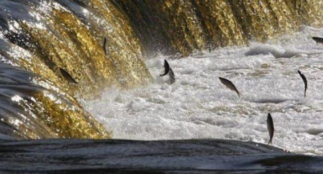 """Lido zivis Kuldīgā! """"Latvijas Venēcijas"""" tiltiņi, ūdenskritumi, rumbā lidojošās vimbas, Jūrkalnes stāvkrasts, suitu sievas un sklandrauši..."""