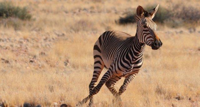 Tuksnešu ieskautā Namībija