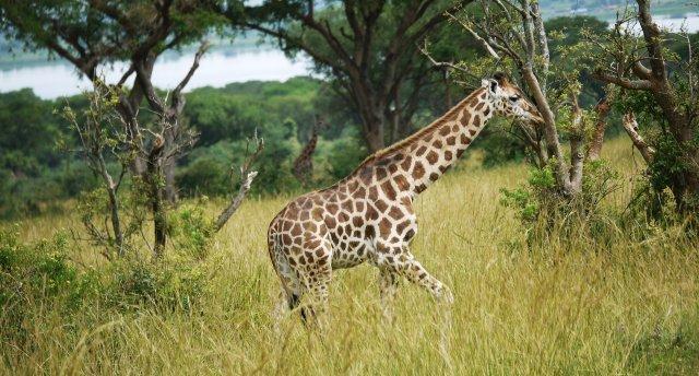 Uganda - zeme starp Nīlu un Viktorijas ezeru
